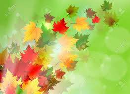 windy-day-leaves-1